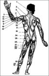 Muskelfunktion Psyche, Trauma Schmerz, traumatische Verarbeitung Körper